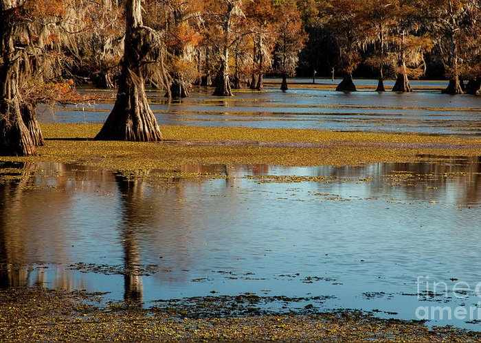 Landscape Greeting Card featuring the photograph Caddo Lake 2016 by Iris Greenwell