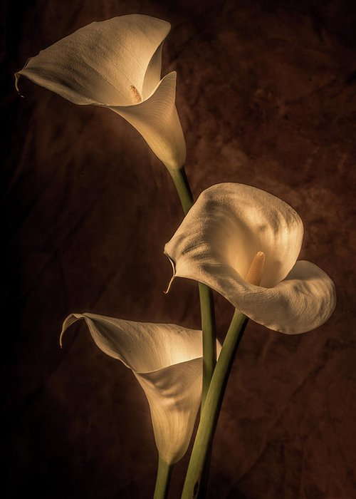 Cala Lilies Greeting Card featuring the photograph Cala Lilies by Mike Penney