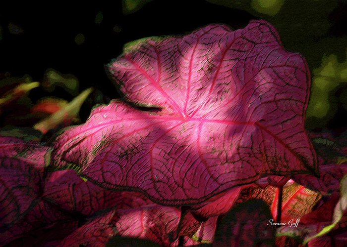 Caladium Greeting Card featuring the photograph Caladium Mystery by Suzanne Gaff