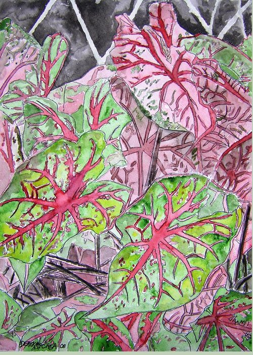 Watercolour Greeting Card featuring the painting Caladiums Tropical Plant Art by Derek Mccrea