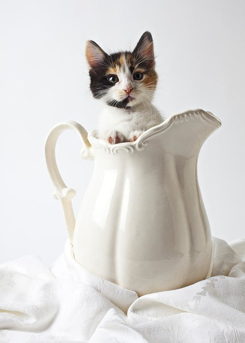 Calico Kitten White Pitcher Greeting Card featuring the photograph Calico Kitten In White Pitcher by Garry Gay