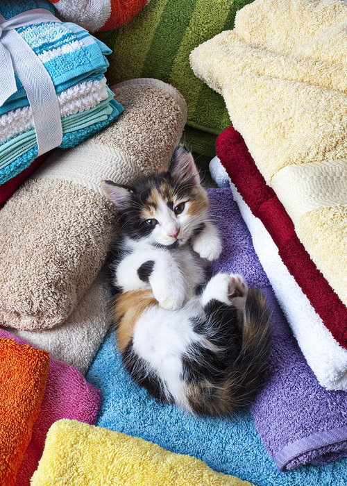Calico Kitten Soft Towels Cat Greeting Card featuring the photograph Calico Kitten On Towels by Garry Gay