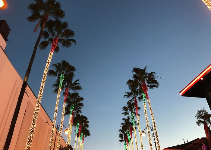 California Greeting Card featuring the photograph California Christmas #1 by YourRadioFriend