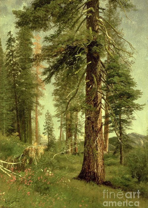 California Greeting Card featuring the painting California Redwoods by Albert Bierstadt