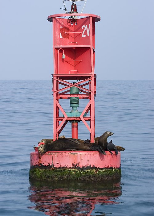 California Sea Lions Greeting Card featuring the photograph California Sea Lions Zalophus by Rich Reid
