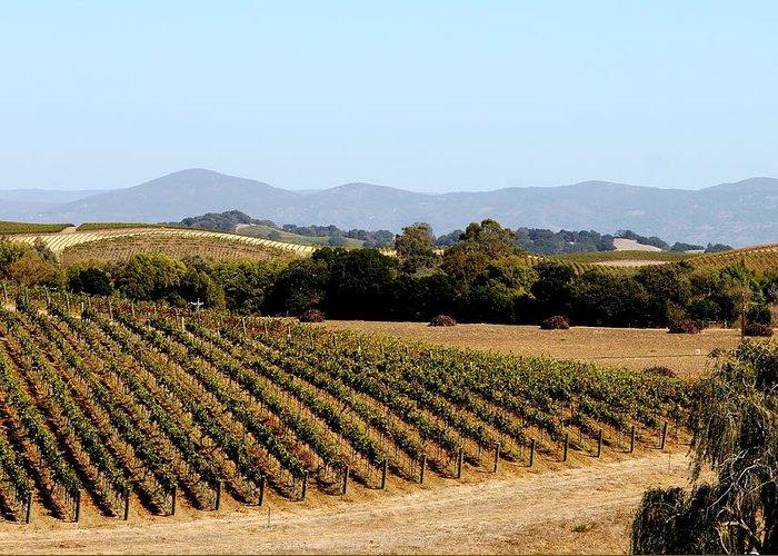 Vineyard Greeting Card featuring the photograph California Vineyards by Charlene Reinauer