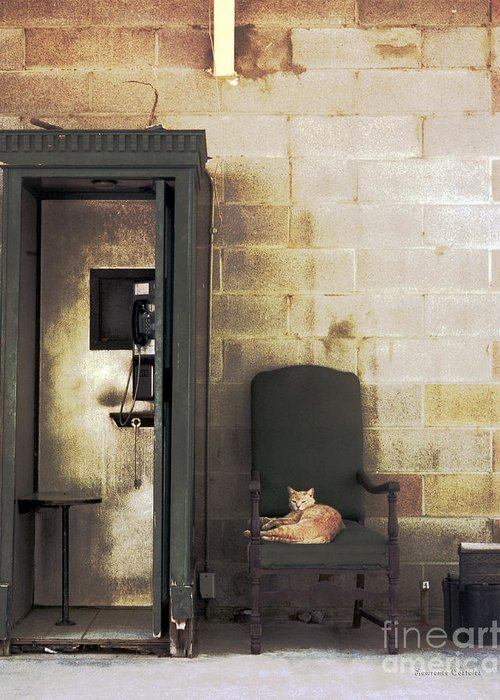 Cat Greeting Card featuring the photograph Call Waiting by Lawrence Costales