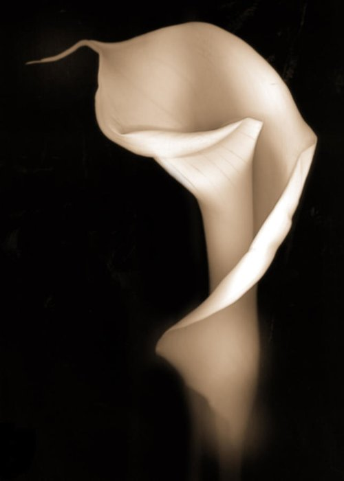 Flowers Greeting Card featuring the photograph Calla by Geoff Ault