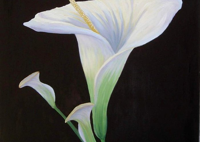 Flower Portrait Greeting Card featuring the painting Calla Lily X by Mary Erbert