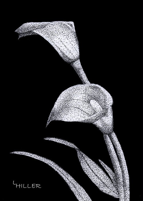Flower Greeting Card featuring the drawing Calla by Linda Hiller
