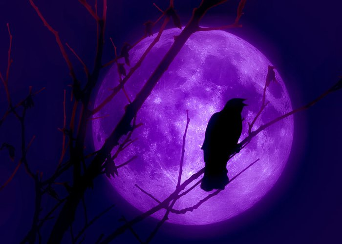 Moon Greeting Card featuring the photograph Calling Out To The Night by Kenneth Krolikowski
