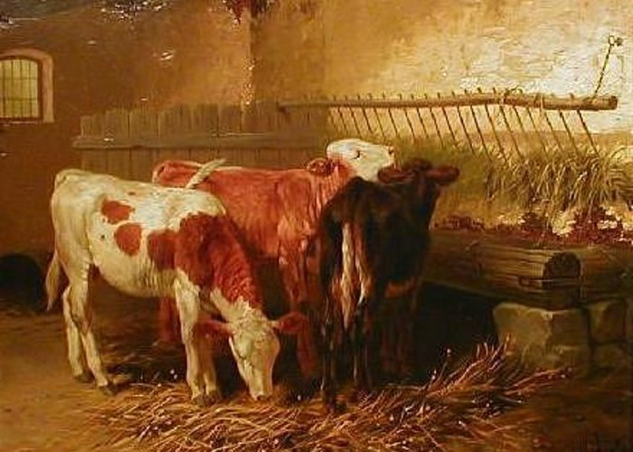 Calves Greeting Card featuring the painting Calves Feeding by Walter Hunt