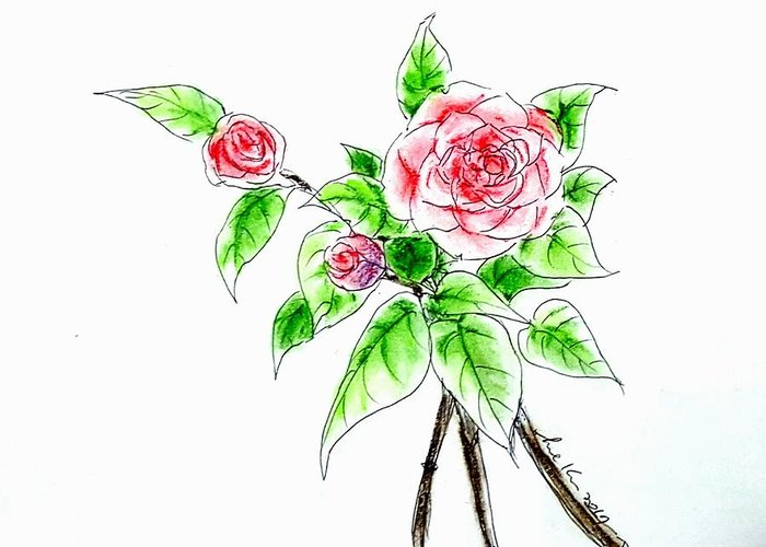 Flower Greeting Card featuring the drawing Camellia Pp by Hae Kim