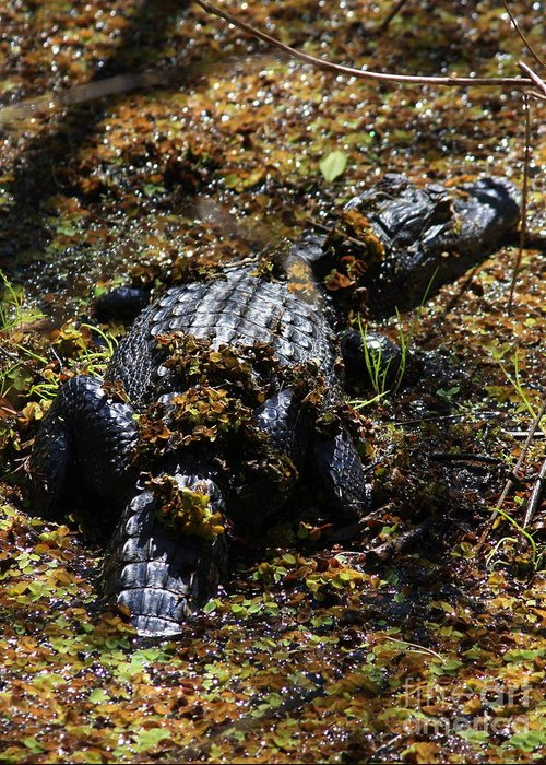 Alligator Greeting Card featuring the photograph Camouflage by Carol Groenen