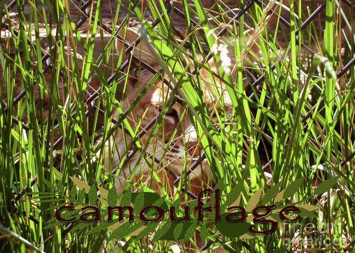 Camouflage Greeting Card featuring the photograph Camouflage by Methune Hively
