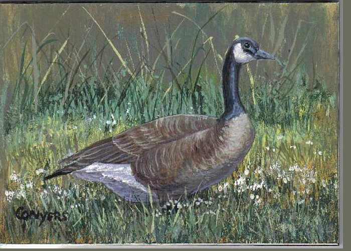 Goose Greeting Card featuring the painting Canada Goose by Peggy Conyers