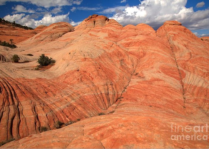 Yant Flat Greeting Card featuring the photograph Candycane Landscape by Adam Jewell