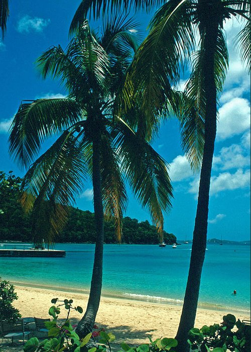 Beaches Greeting Card featuring the photograph Caneel Bay Palms by Kathy Yates