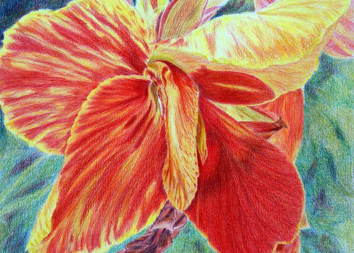 Canna Lily Greeting Card featuring the drawing Canna Lily by Tina Storey