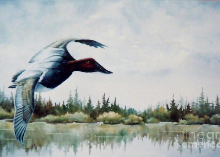Single Canvasback Over Lake Earl Crescent City Greeting Card featuring the painting Canvasback Over Lake by Lynne Parker