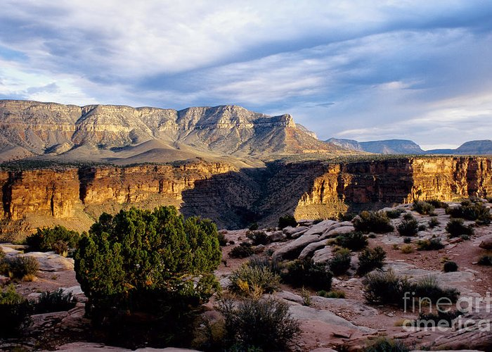 Toroweap Greeting Card featuring the photograph Canyon Walls At Toroweap by Kathy McClure