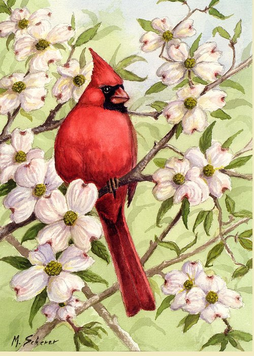 Wildlife Watercolor Greeting Card featuring the painting Cardinal In Dogwood by Michael Scherer