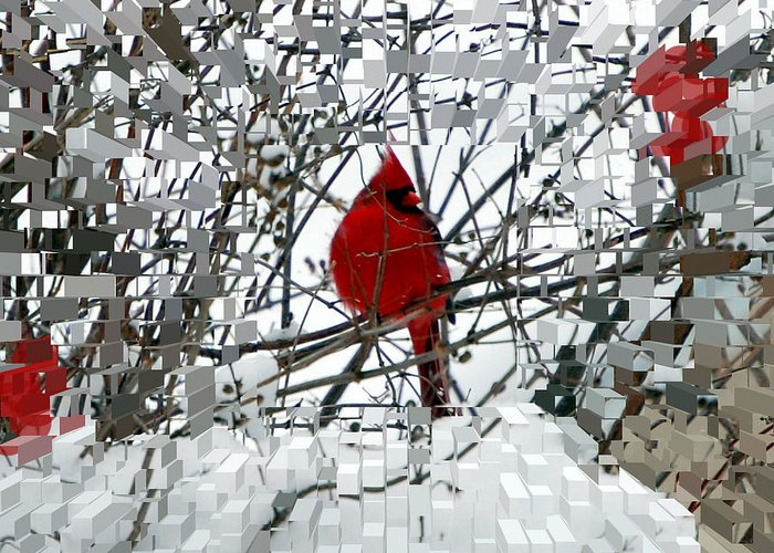 Birds Greeting Card featuring the photograph Cardinal by Lisa Kane