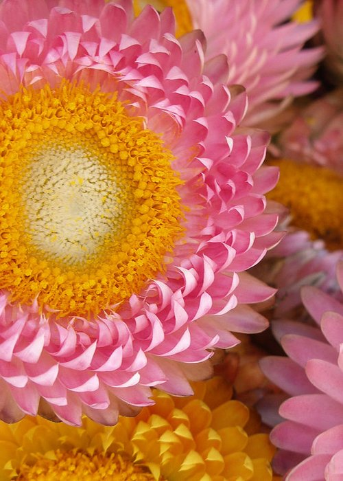 Flower Greeting Card featuring the photograph Carmel Flower by Sarah Madsen