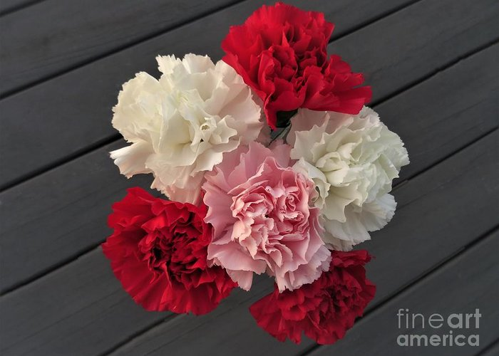 Carnation Greeting Card featuring the photograph Carnations by Scenic Sights By Tara