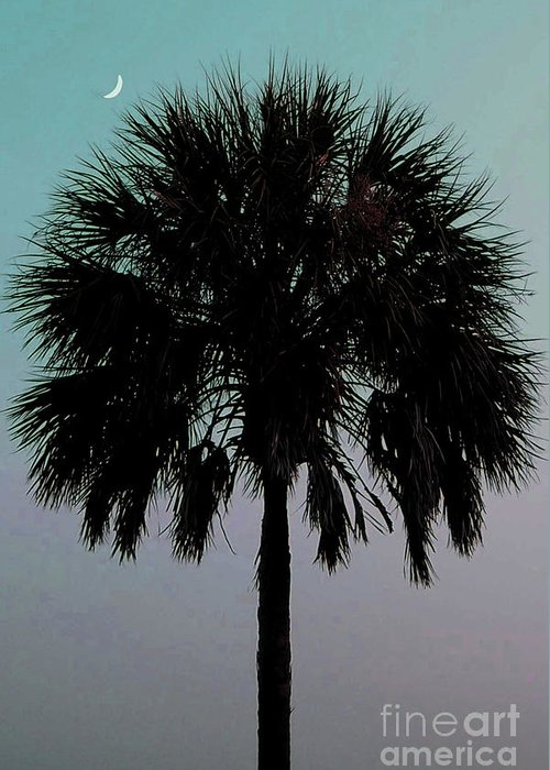 Palm Tree Greeting Card featuring the photograph Carolina Moon by Melanie Snipes