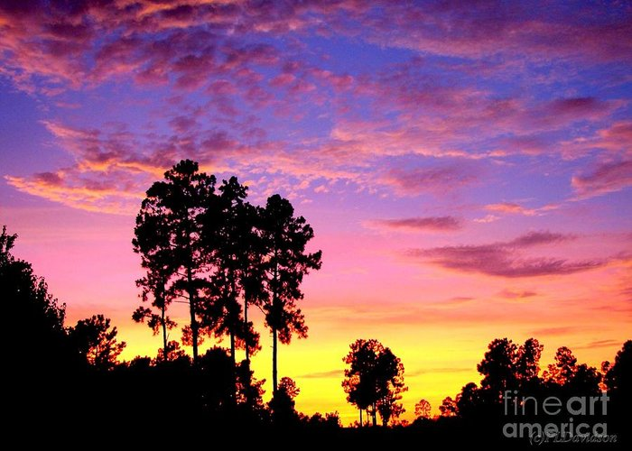 Sunset Greeting Card featuring the photograph Carolina Pine Sunset by Patricia L Davidson