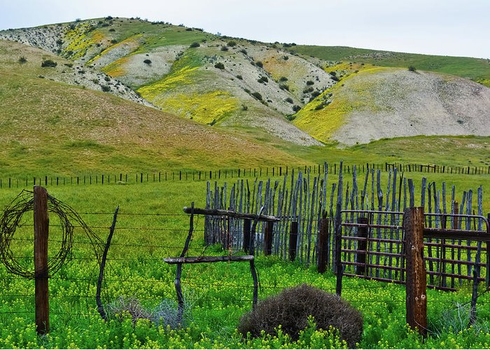 Carrizo Plain National Monument Greeting Card featuring the photograph Carrizo Plain Ranch Wildflowers by Kyle Hanson
