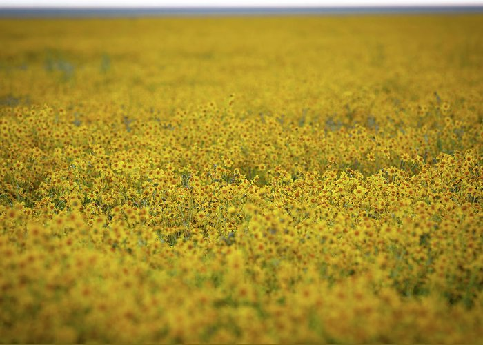 Wildflowers Greeting Card featuring the photograph Carrizo Super Bloom by Scott Hadley