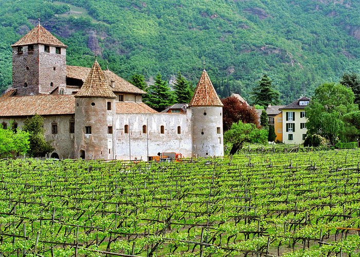 Castle Greeting Card featuring the photograph Castle And Vineyard In Italy by Greg Matchick