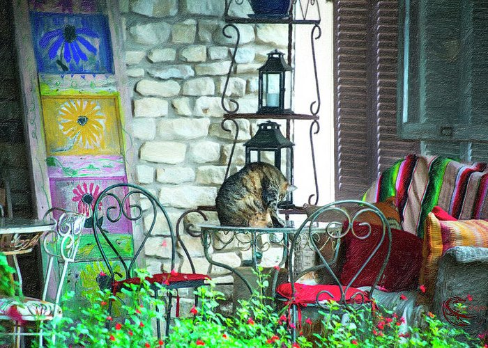 Cat Greeting Card featuring the photograph Casual cat by Roy Nierdieck