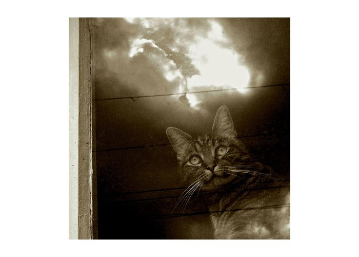 Cat Greeting Card featuring the photograph Cat In The Window by Patricia Strand