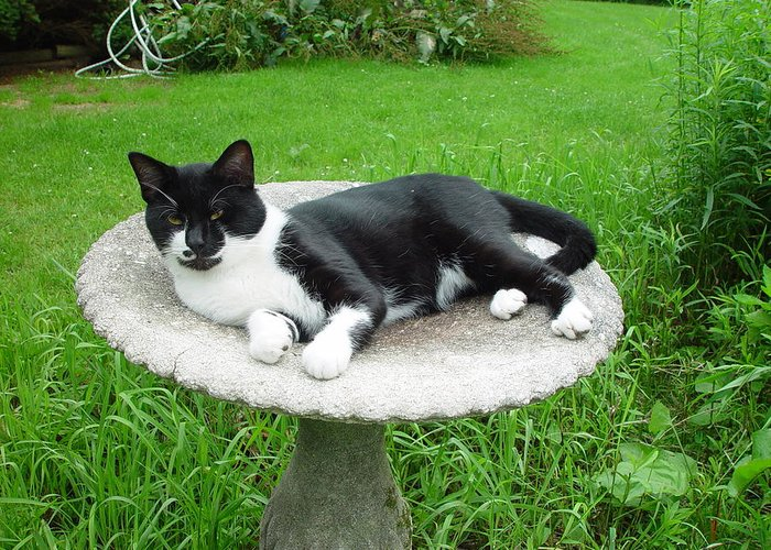 Cat Greeting Card featuring the photograph Cat Relaxing In A Birdbath In The Summertime by James Preston