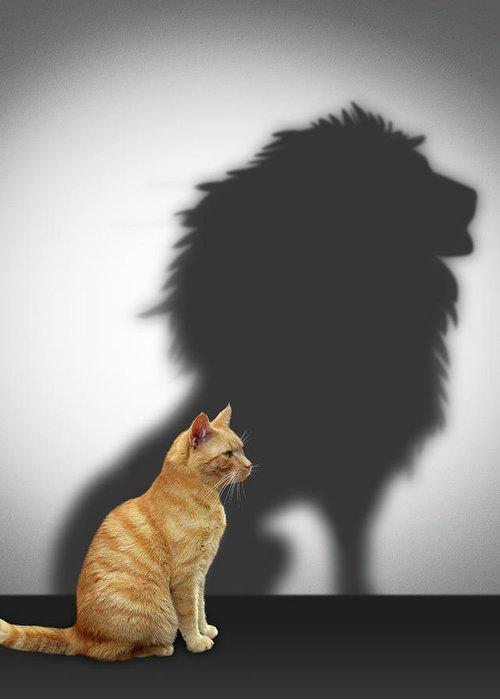 「lion cat」的圖片搜尋結果