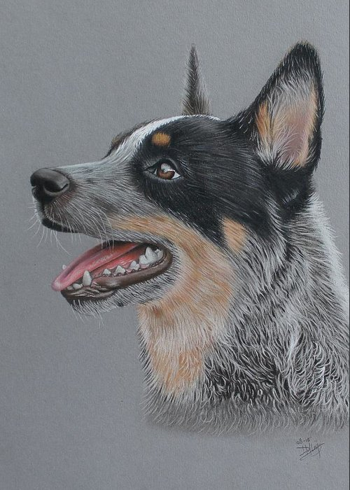 Cattle Dog Greeting Card featuring the drawing Cattle Dog by Denise Nijs