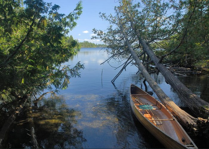 Boundary Waters Canoe Area Wilderness Greeting Card featuring the photograph Cedar Strip Canoe And Cedars At Hanson Lake by Larry Ricker