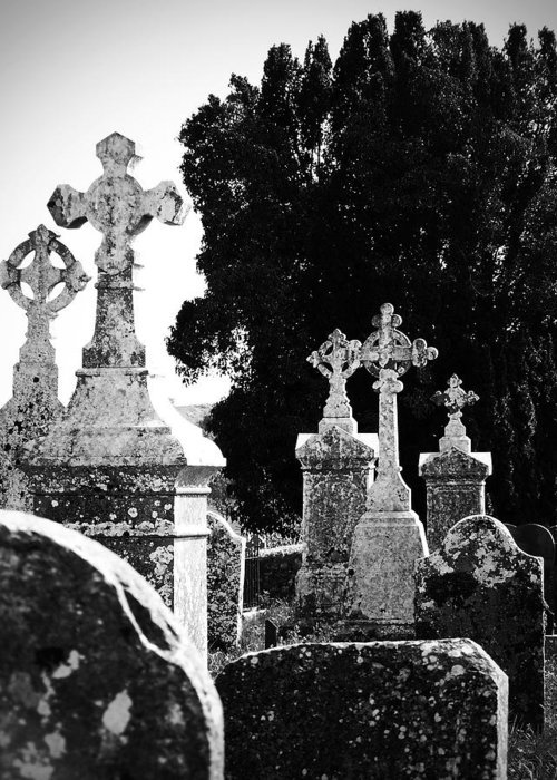 Celtic Greeting Card featuring the photograph Celtic Crosses At Fuerty Cemetery Roscommon Ireland by Teresa Mucha