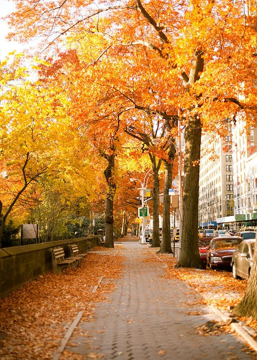 Yellow Leaves Greeting Card featuring the photograph Central Park West by Ariane Moshayedi