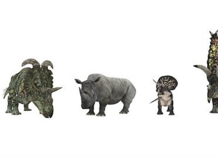Nedoceratops Greeting Card featuring the photograph Cerapod Dinosaurs Compared To A Rhino by Walter Myers