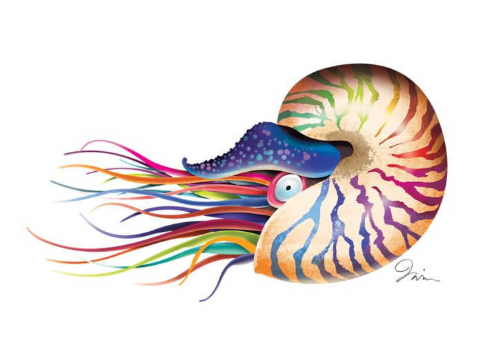Fish Greeting Card featuring the digital art Chambered Nautilus On White by Trevor Irvin