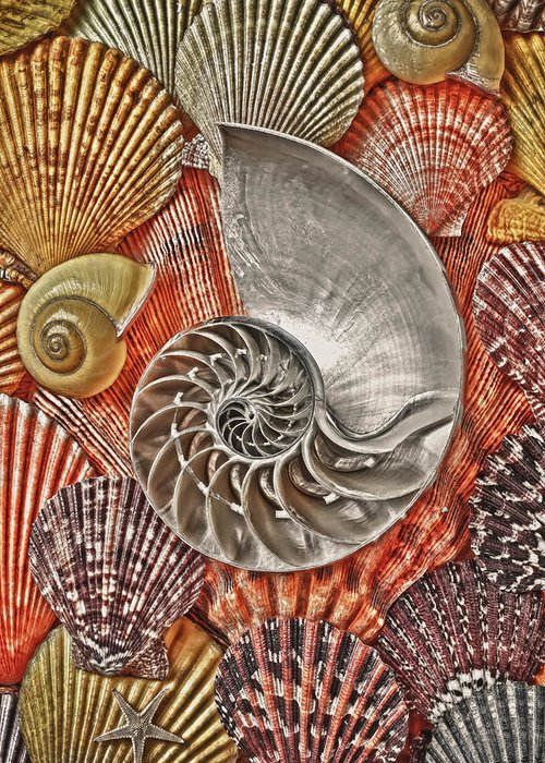 Chambered Nautilus Greeting Card featuring the photograph Chambered Nautilus Shell Abstract by Garry Gay