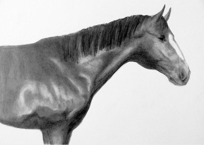 Horse Greeting Card featuring the drawing Champ 2 by Susan Tilley