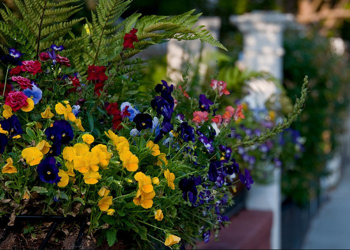 Charleston Greeting Card featuring the photograph Charleston Flower Boxes by Melissa Wyatt