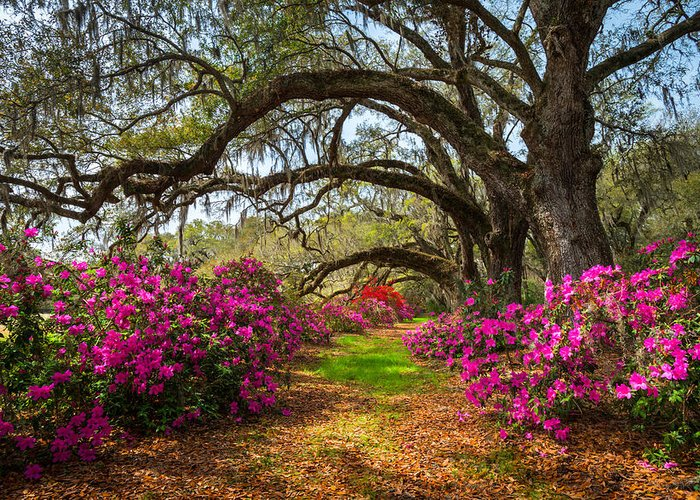 Charleston Sc Spring Flowers Scenic Landscape South Carolina Greeting Card