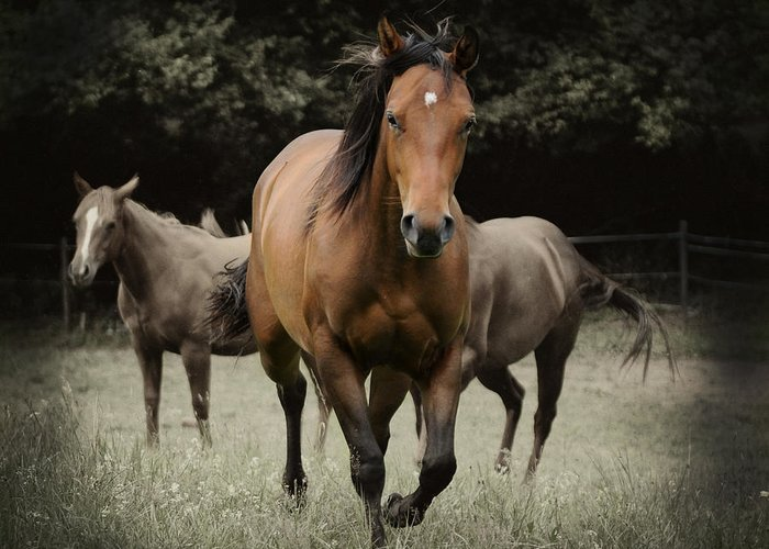 Quarter Horse Greeting Card featuring the photograph Charlie And Friends by Jana Goode