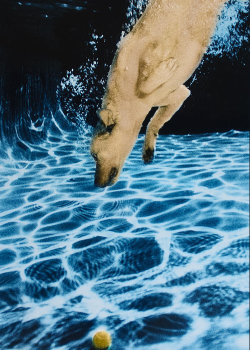 Dog Greeting Card featuring the photograph Chase 2 by Jill Reger